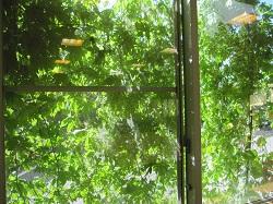 デイケア緑のカーテン